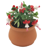 Pot of miniature clay fuschias